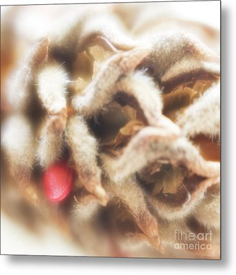 Metal Print featuring the photograph Magnolia Seedpod by Elena Nosyreva