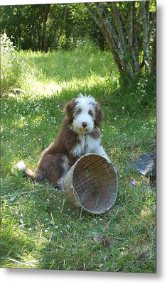 Metal Print featuring the photograph Maisie With Basket by Mark Alan Perry