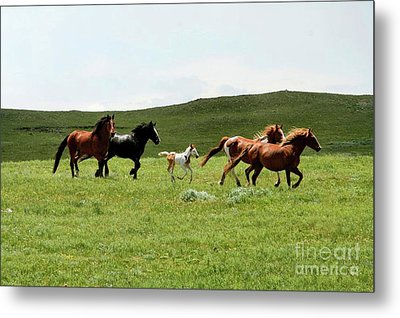 Mama's Little Foal Metal Print