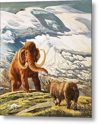 Mammoth Meets Rhinoceros Metal Print