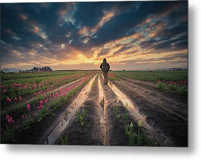 Metal Print featuring the photograph Man Watching Sunrise In Tulip Field by William Lee
