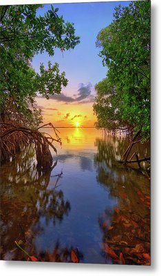 Metal Print featuring the photograph Mangrove Sunset From Jensen Beach Florida by Justin Kelefas