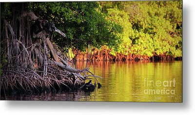 Mangroves Of Roatan Metal Print by Doug Sturgess