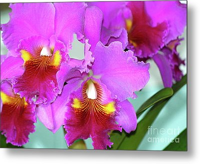Many Purple Orchids Metal Print