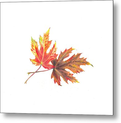 Maple Leaves Metal Print