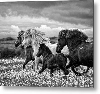 March Of The Mares Metal Print by Joan Davis