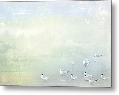 Metal Print featuring the photograph Marco Morning by Karen Lynch