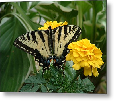 Marigold And Butterfly Metal Print by Emerald GreenForest