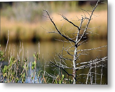 Marsh Afternoon Metal Print by Mary  Haber