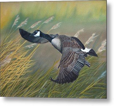 Marsh Goose Metal Print