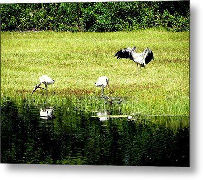 Metal Print featuring the photograph Mating Dance by Terri Mills