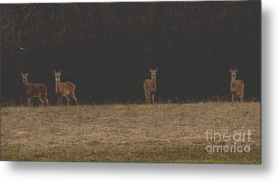 Matte Print Of Four Deer Metal Print
