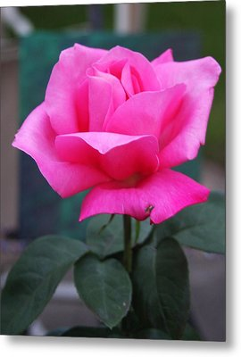 Metal Print featuring the photograph May Beauty by Vadim Levin