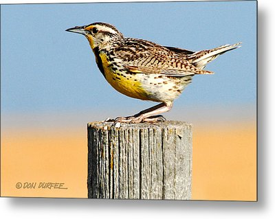 Metal Print featuring the photograph Meadowlark 2 by Don Durfee