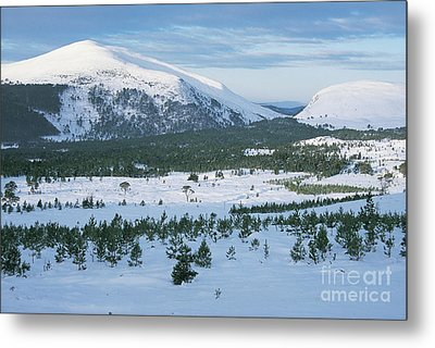 Meall A Bhuachaille - Glenmore Forest Metal Print