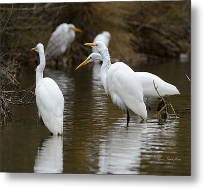 Meeting Of The Egrets Metal Print by George Randy Bass