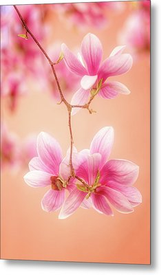Melodies Of Spring  Metal Print