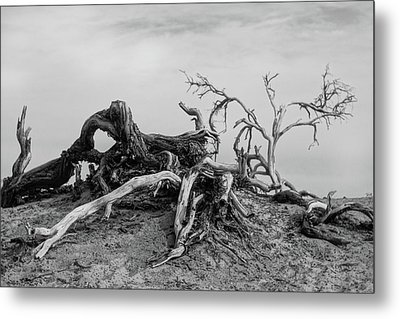 Mesquite Roots - Death Valley 2015 Metal Print