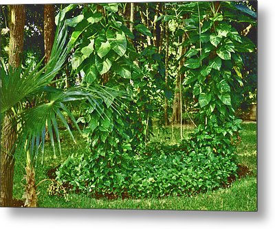 Metal Print featuring the photograph Mexico Greenery by Tammy Sutherland