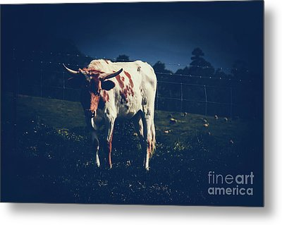 Metal Print featuring the photograph Midnight Encounter by Sharon Mau