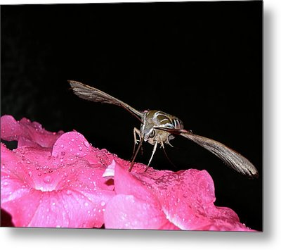 Midnight Hummer Metal Print by Randy Rosenberger