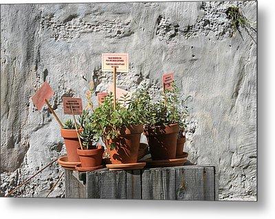 Metal Print featuring the photograph Miniature Plants For Sale by Shirin Shahram Badie