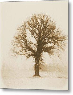 Minimal Winter Tree Metal Print