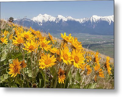 Mission Mountain Balsam Blooms Metal Print by Jack Bell