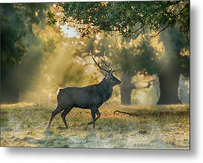 Metal Print featuring the photograph Misty Walk by Scott Carruthers