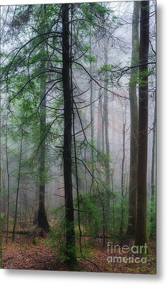 Metal Print featuring the photograph Misty Winter Forest by Thomas R Fletcher