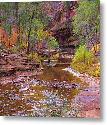 Mn1212 Metal Print by Mikes Nature