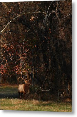 Metal Print featuring the photograph Monarch Joins The Rut by Michael Dougherty