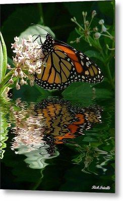 Monarch Reflection Metal Print by Rick Friedle