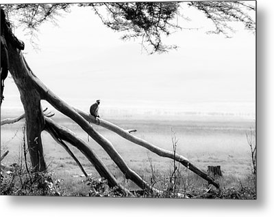 Monkey Alone On A Branch Metal Print by Darcy Michaelchuk