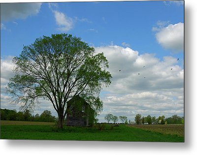Metal Print featuring the photograph Monmouth Battlefield by Steven Richman