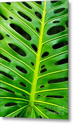 Monstera Leaf Metal Print by Carlos Caetano