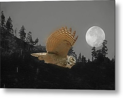 Moonlight Owl Metal Print by Donna Kennedy