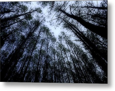 Moonlite Forest Metal Print by M K  Miller