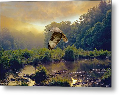 Metal Print featuring the photograph Morning Buzzard by Roy  McPeak