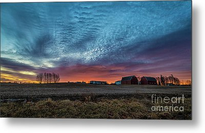 Morning Color Metal Print