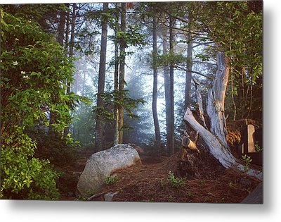 Morning Forest Light Metal Print