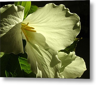 Morning Light - Trillium Metal Print