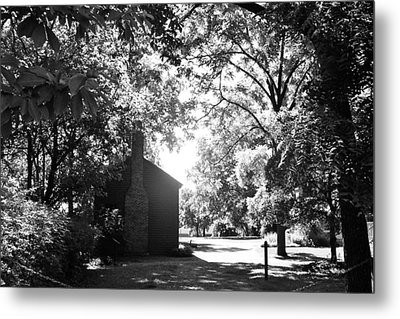 Morning Light In The Woods Metal Print