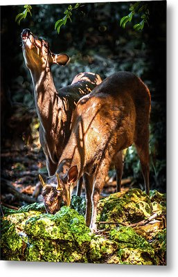 Morning Light Of Dawn Metal Print by Karen Wiles