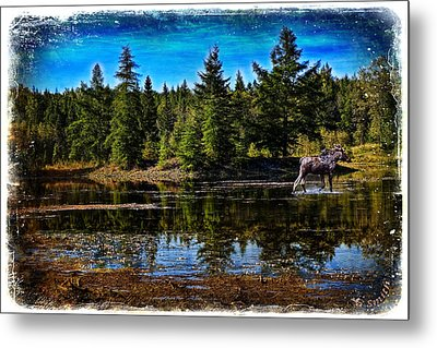 Metal Print featuring the photograph Morning Walk by Gary Smith
