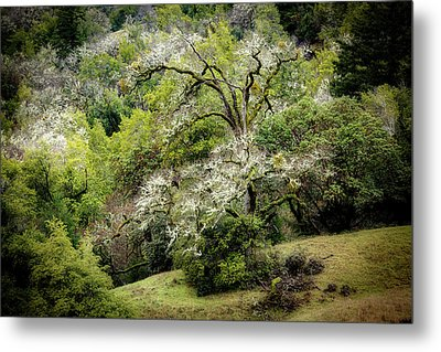 Moss Covered Tree Metal Print by Mike Penney