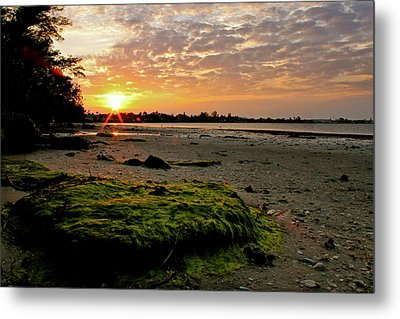 Moss On The Beach Metal Print by Angie Wingerd