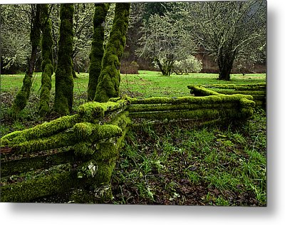 Mossy Fence 2 Metal Print by Bob Christopher
