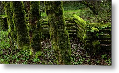 Mossy Fence Metal Print by Bob Christopher