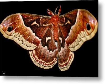 Moth Red Wings Metal Print by Debra     Vatalaro